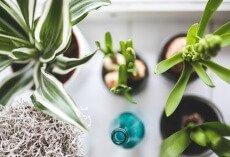 Jak wykorzystać rośliny doniczkowe w aranżacjach?
