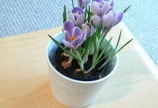 Postaw na rośliny doniczkowe – zdobią wnętrze i oczyszczają powietrze