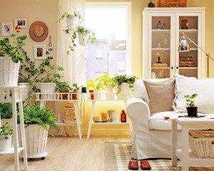 kwiaty_w_mieszkaniu_1173170