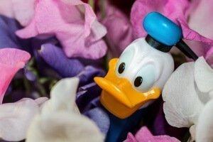 donald-duck-973226_1280